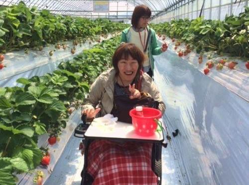 車いすでもイチゴ狩りは楽しめます