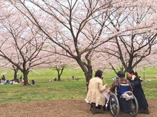 満開の桜の下でお食事です