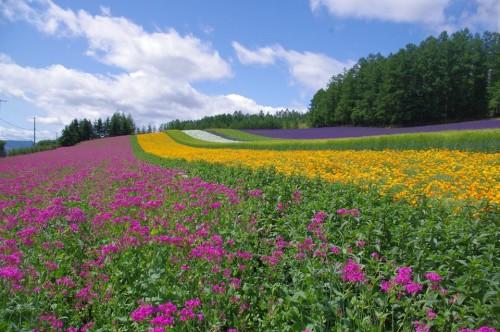 「ファーム富田」彩の畑